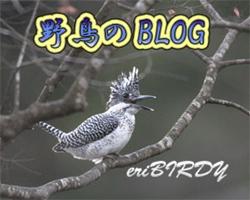 三宅島バーディ|野鳥BLOG